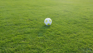 Fußball Naturrasen Sportstättenbau